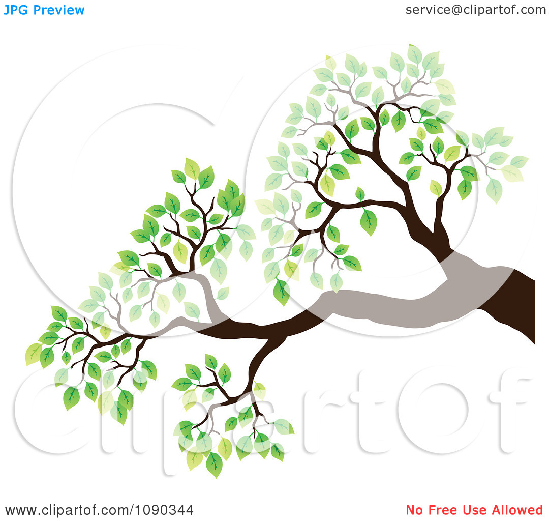 1080x1024 Tropical Tree Branches Clipart
