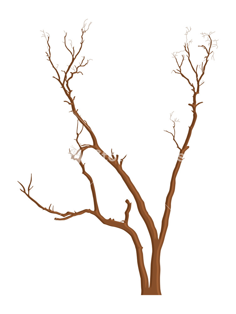 752x1000 Dead Tree Branches Elements Design Royalty Free Stock Image