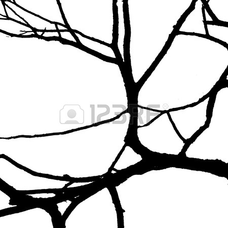 450x450 Dead Tree Branches Isolated On White Background Stock Photo
