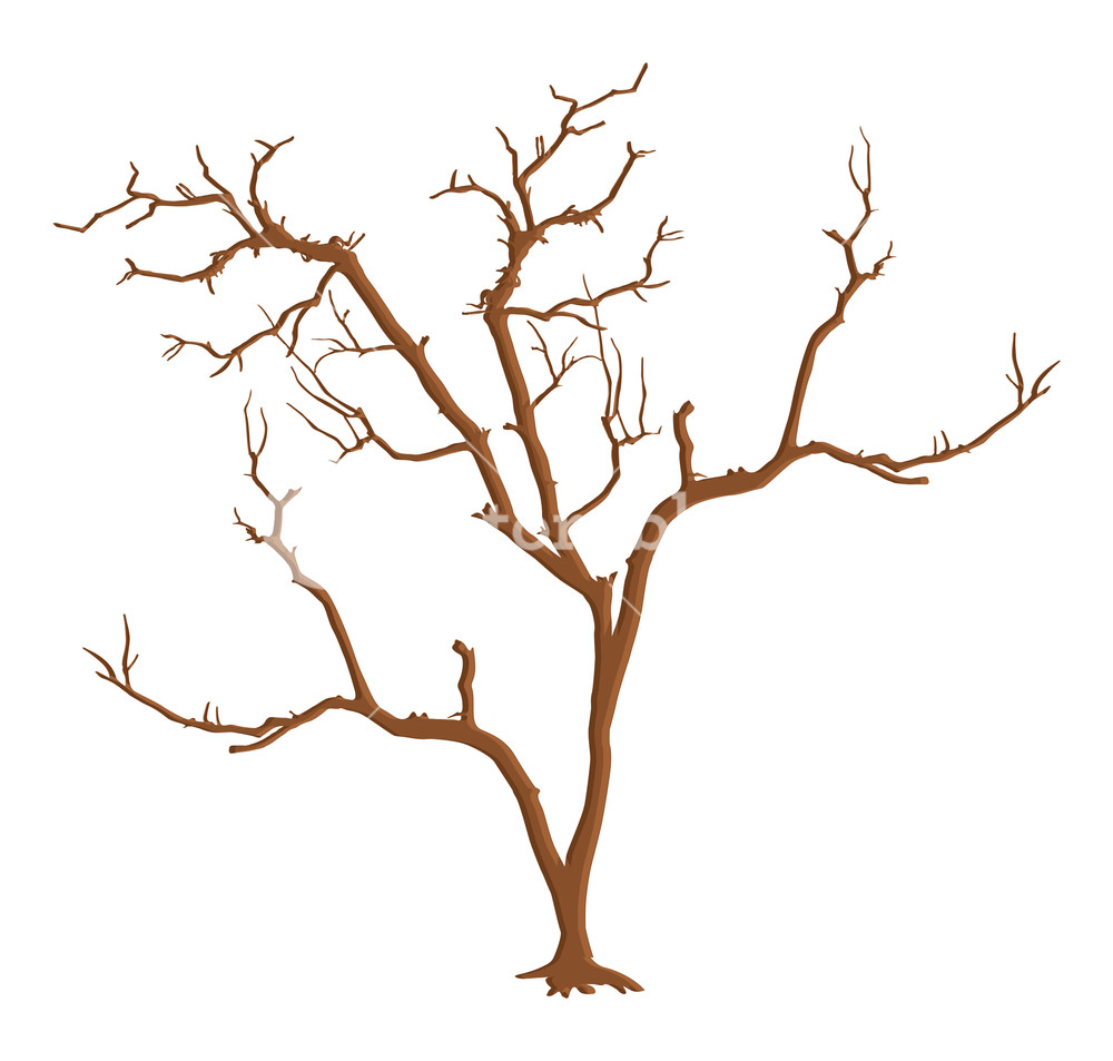 1000x953 Dead Tree Branches Isolated Royalty Free Stock Image
