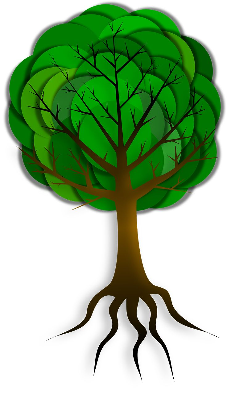 736x1280 106 Best Tree Images Drawing And Plants