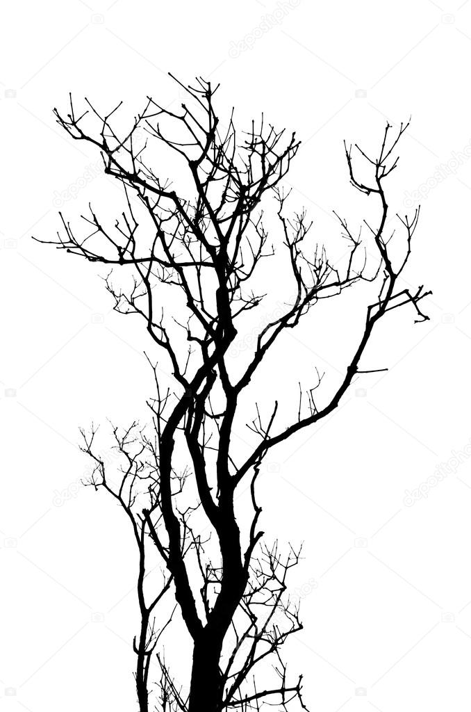 678x1024 Leafless Tree Branches Abstract Background. Black And White