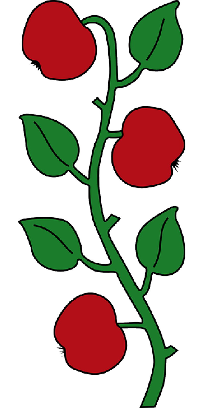 800x1600 Apple, Food, Fruit, Tree, Branches, Cartoon, Branch