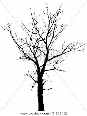 355x470 Tree Branches Images, Illustrations, Vectors