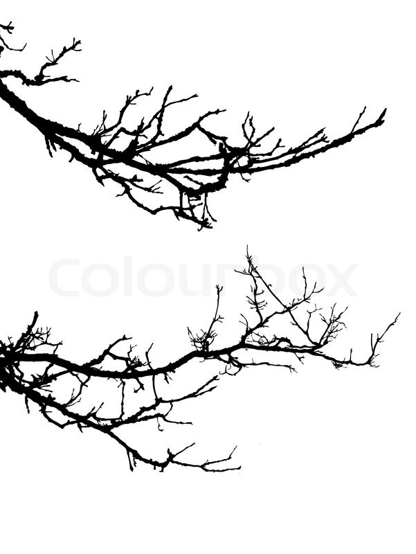 601x800 Vector Silhouette Of The Branch Tree On White Background Stock