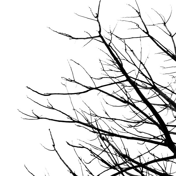 612x612 Branches Clipart Black And White