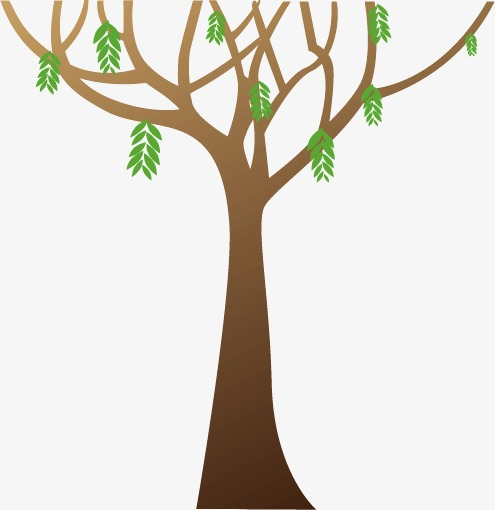 495x510 Branch Tree Branches, Concise, Willow, Living World Png And Vector