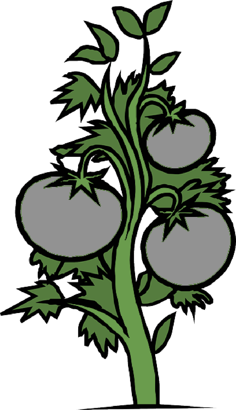 800x1391 RED, FOOD, DRAWING, SKETCH, PLANTS, TREE, CARTOON