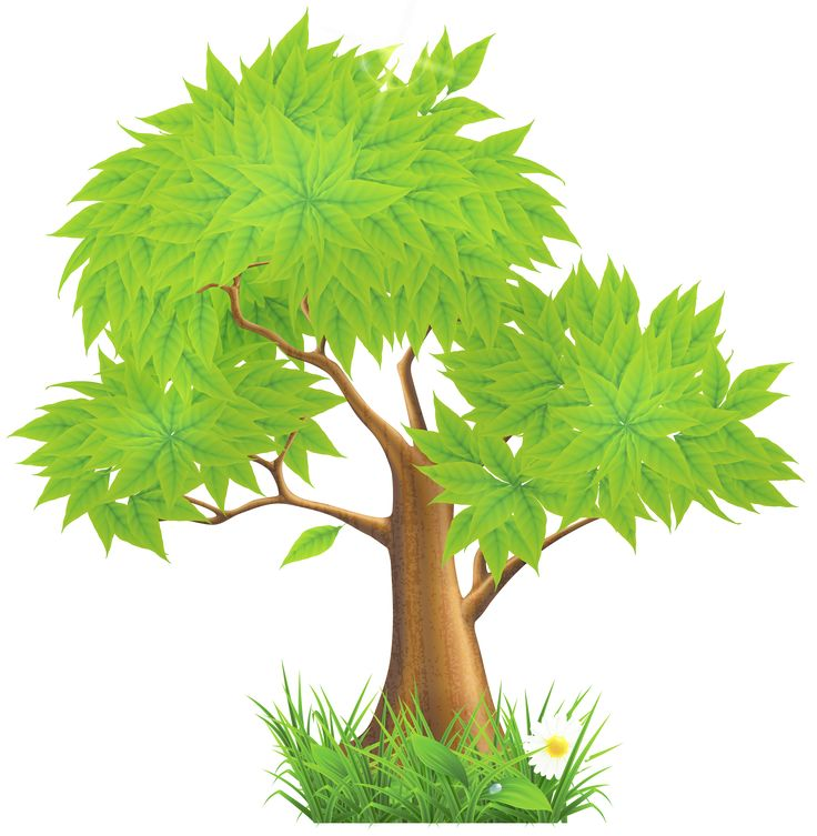 Tree Cartoon Png