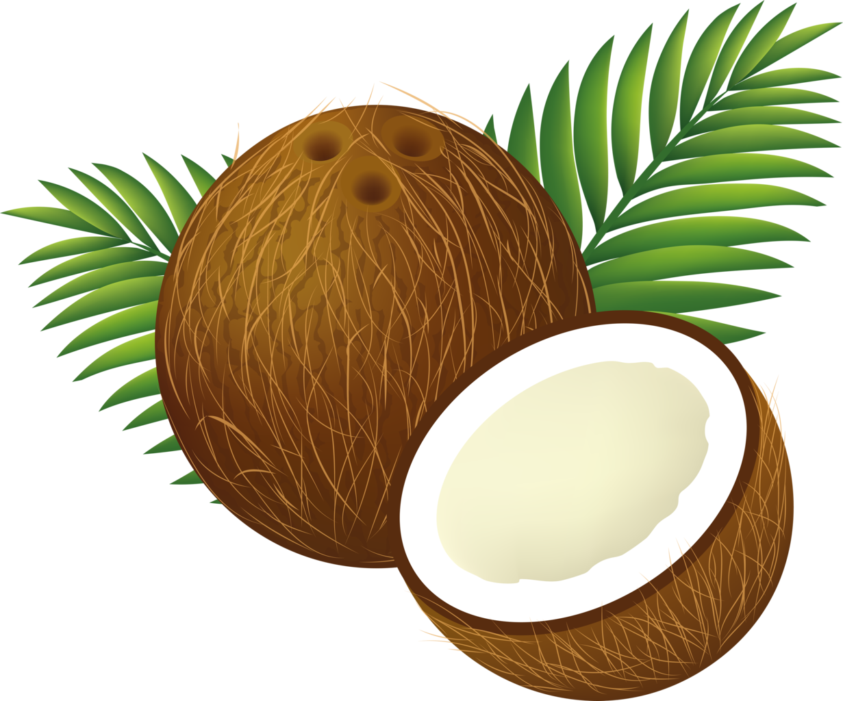 1231x1024 Filecoconut Clipart Cartoon.png