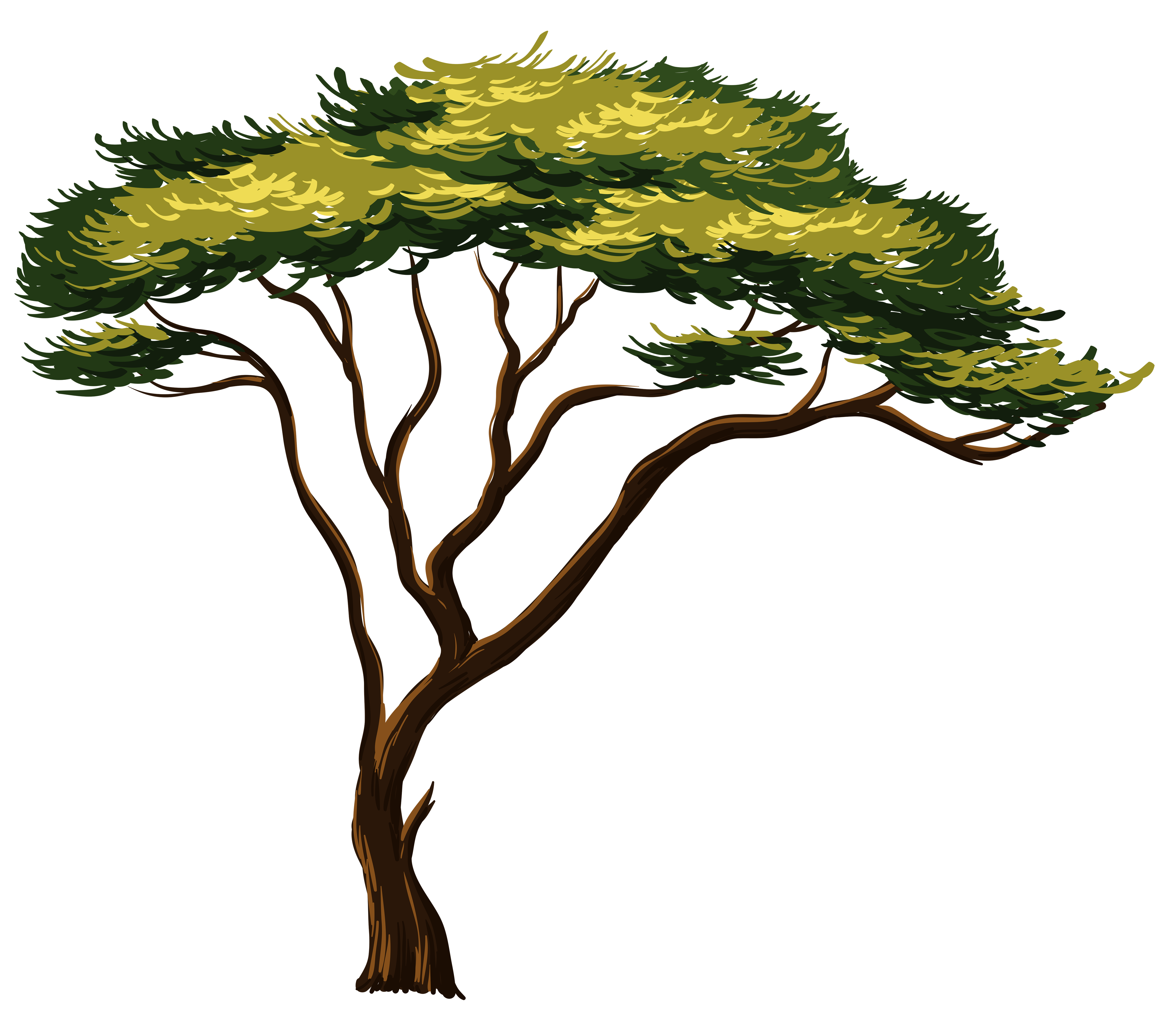 4792x4120 Branch Clipart African Tree