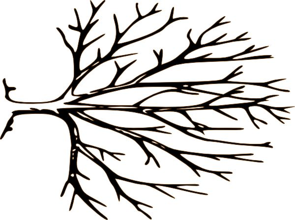 600x448 Dead Tree clipart black and white
