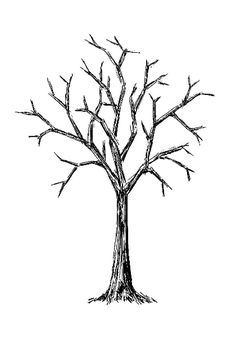 236x337 Incredible Bare Tree Clipart Clip Art Vector Images Illustrations