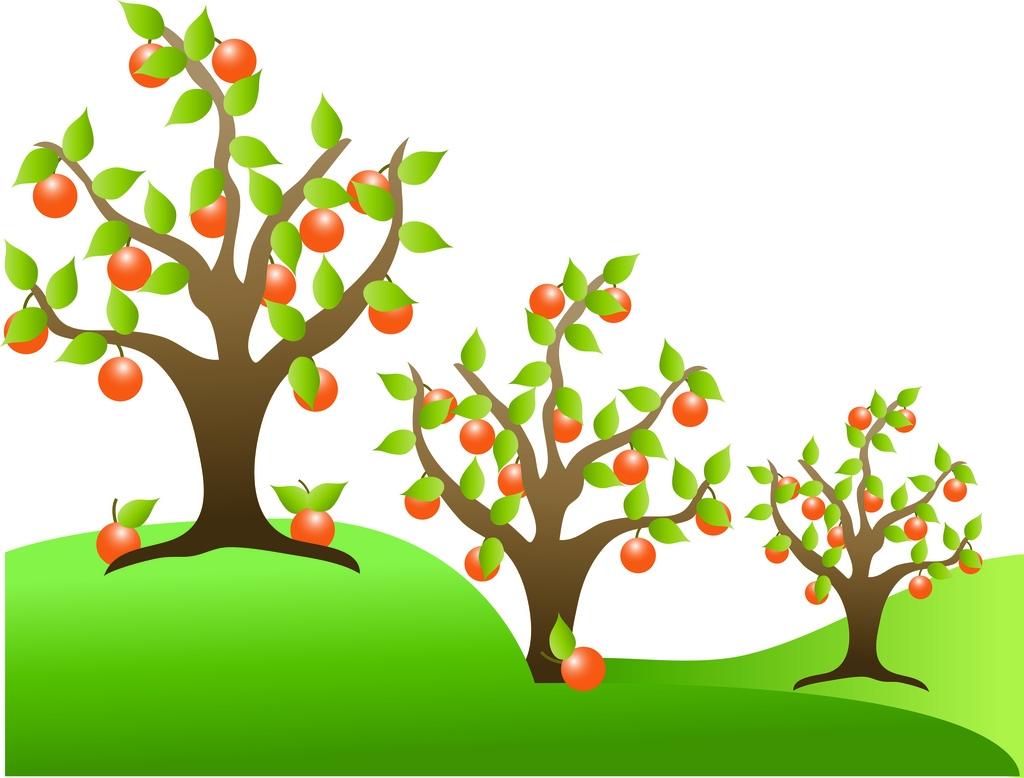 1024x778 Apricot Tree Clip Art Cliparts