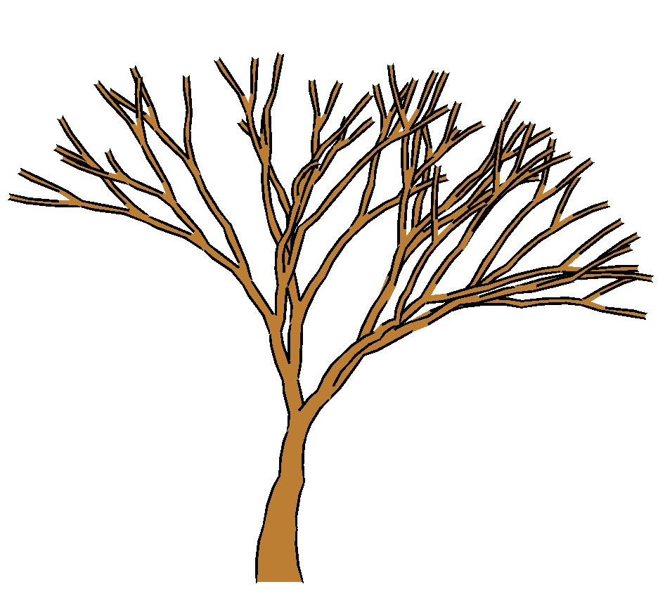 946x848 Barren Clipart Autumn Tree