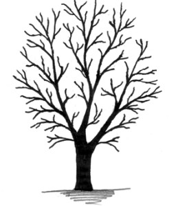 256x300 Leaves Tree Clipart