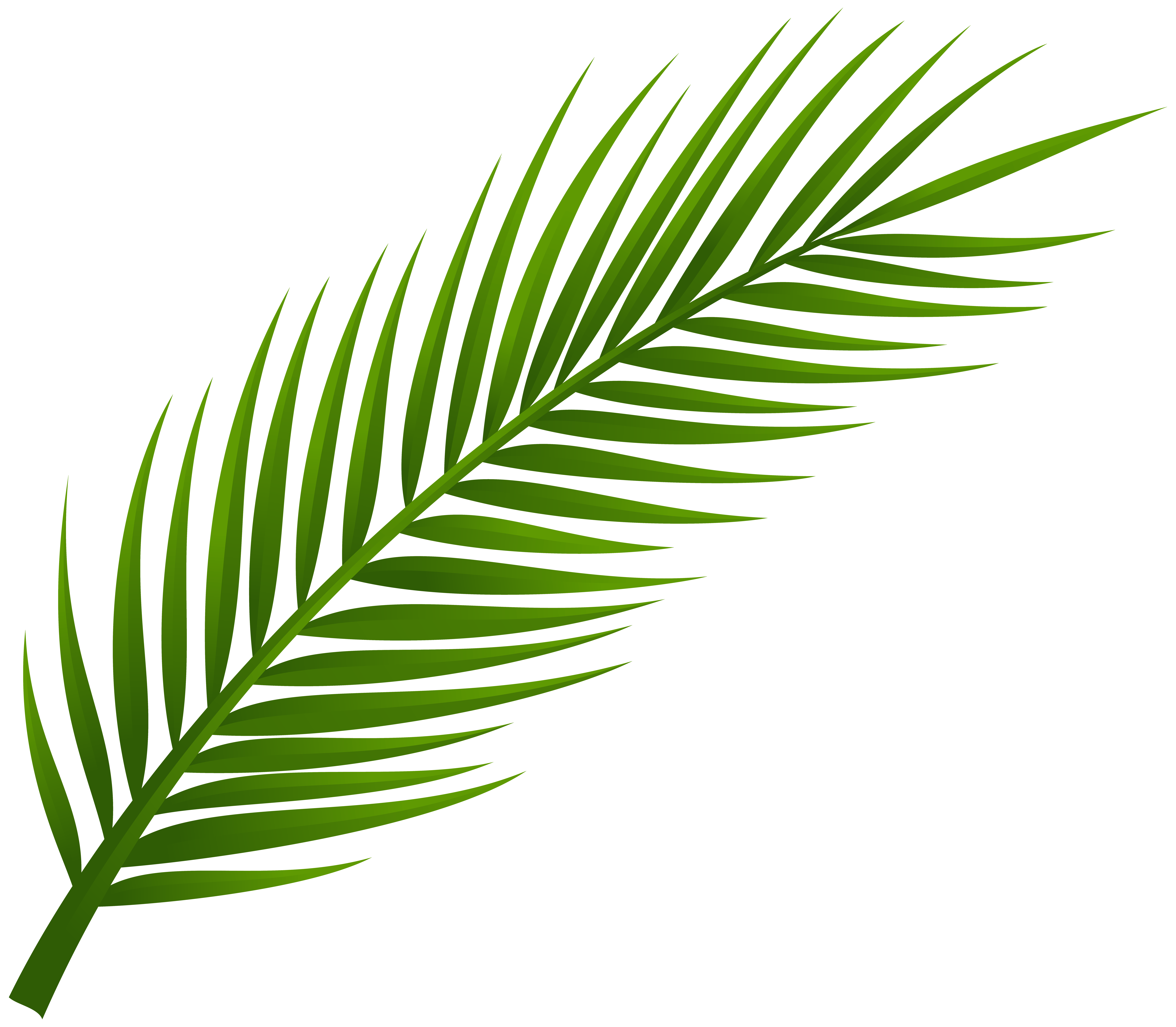8000x6983 Palm Leaves Clipart