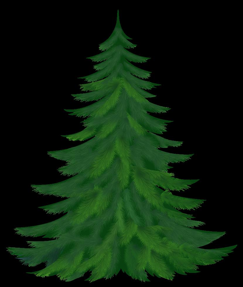 830x978 Pine Tree Clipart