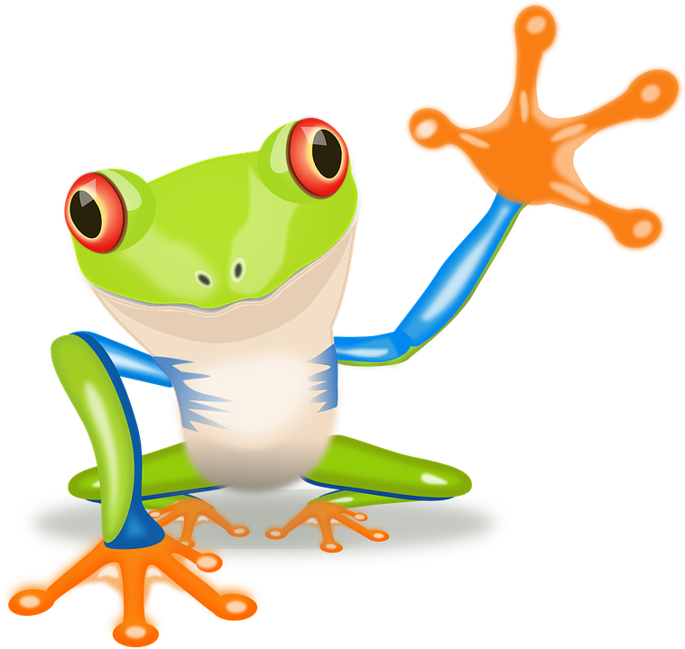759x720 Tree Frog Clipart Amphibian