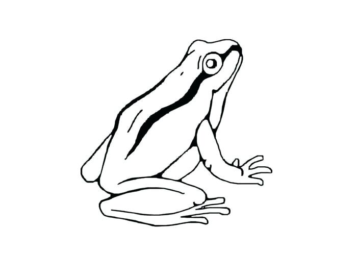 700x500 Tree Frog Outline Frog Tattoo Ideas Tattoo Ideas Pictures Tattoo