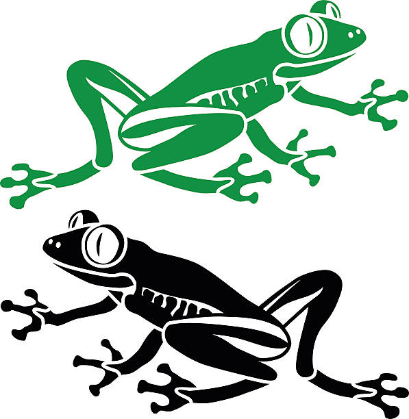 597x612 Tree Frog Clipart Rainforest Habitat