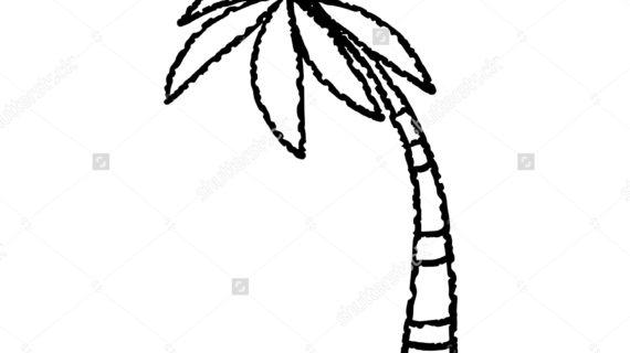 570x320 Palm Tree Line Drawing Coconut Palm Tree Black Lines Hand Stock