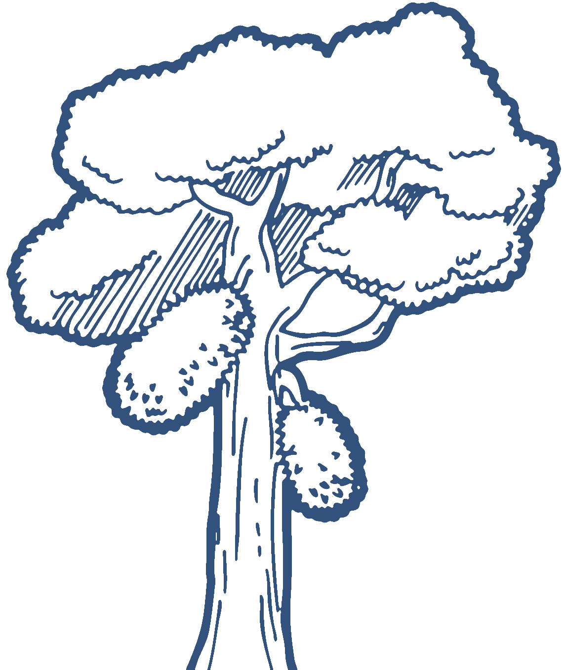 Tree Outline Clipart Free Download Best Tree Outline Clipart On