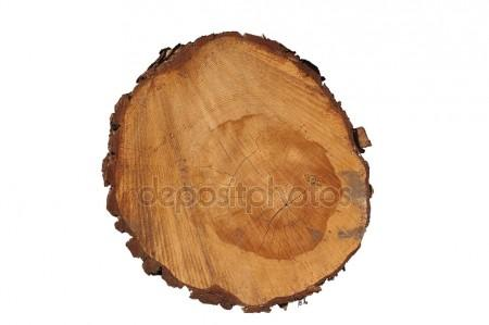 450x299 Cut Tree Trunk Stock Photos, Royalty Free Cut Tree Trunk Images
