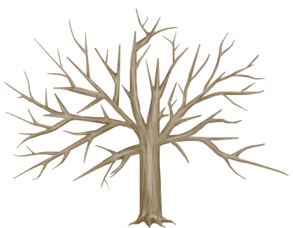 1025x800 Drawing A Tree Trunk Tree Trunk Drawing Clipart