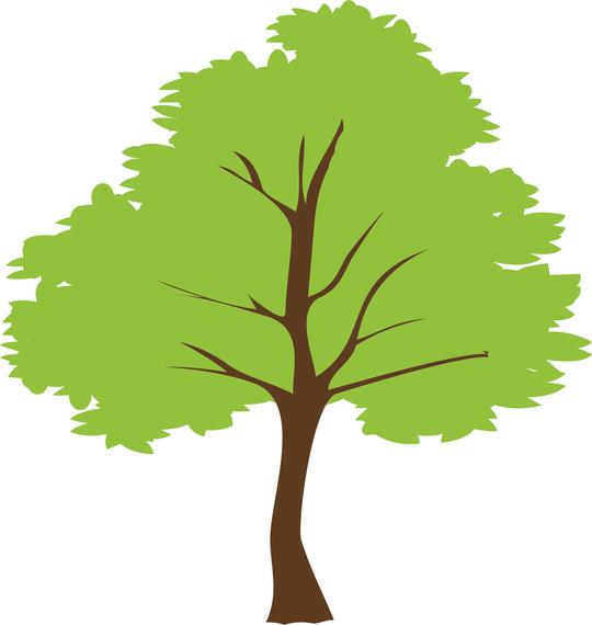 540x570 Tree Vector