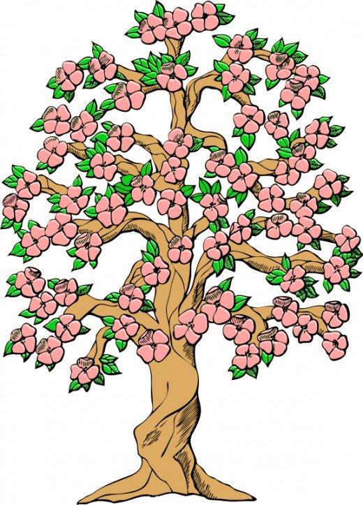 520x723 Tree Clip Art 175 Free Clip Art Trees Hubpages