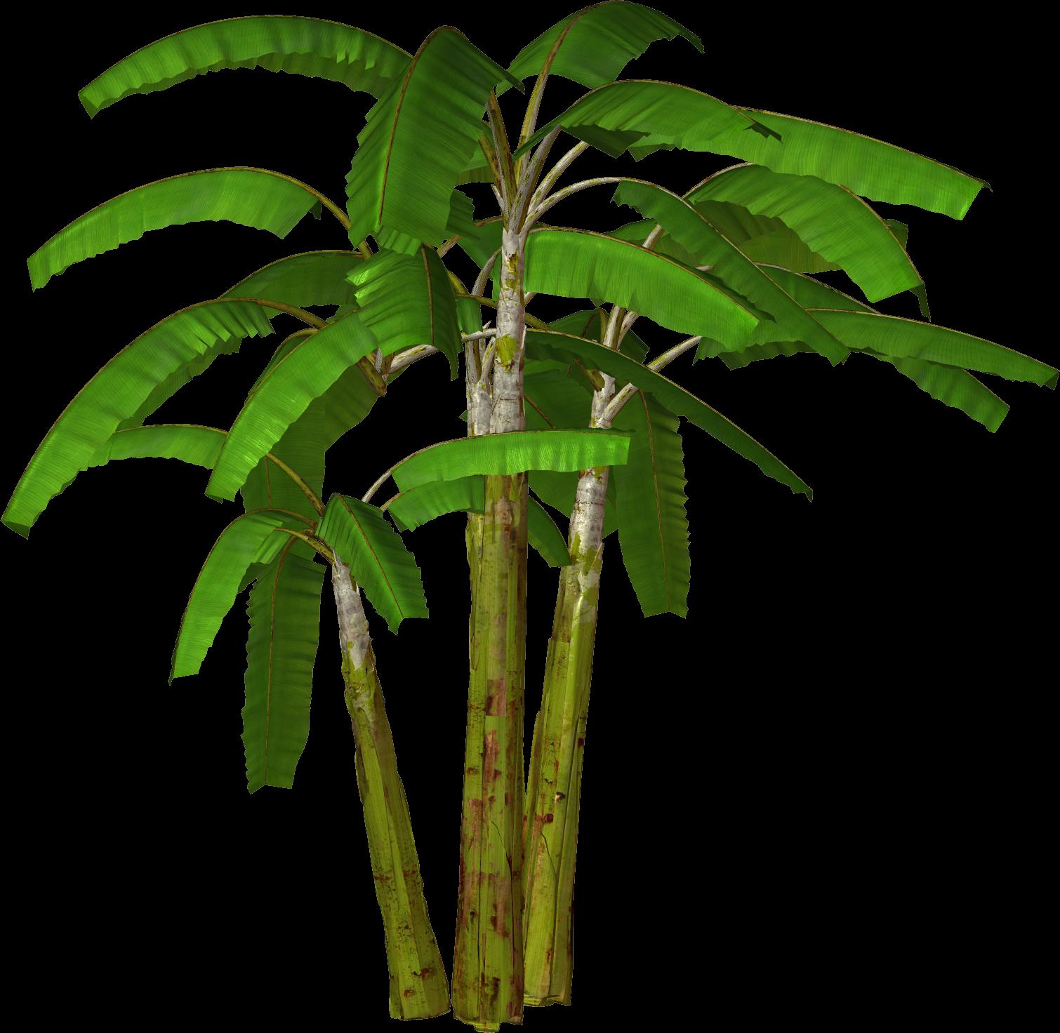 1510x1472 Top 82 Palm Tree Clip Art