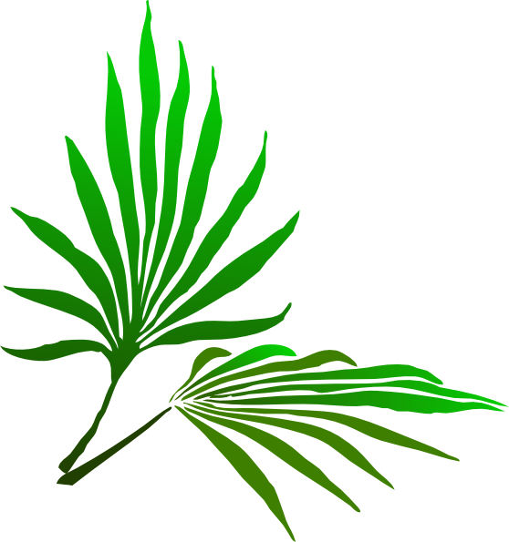 558x595 Palm Branches Clipart