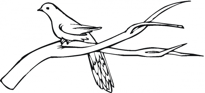 700x317 With Branches Coloring Page