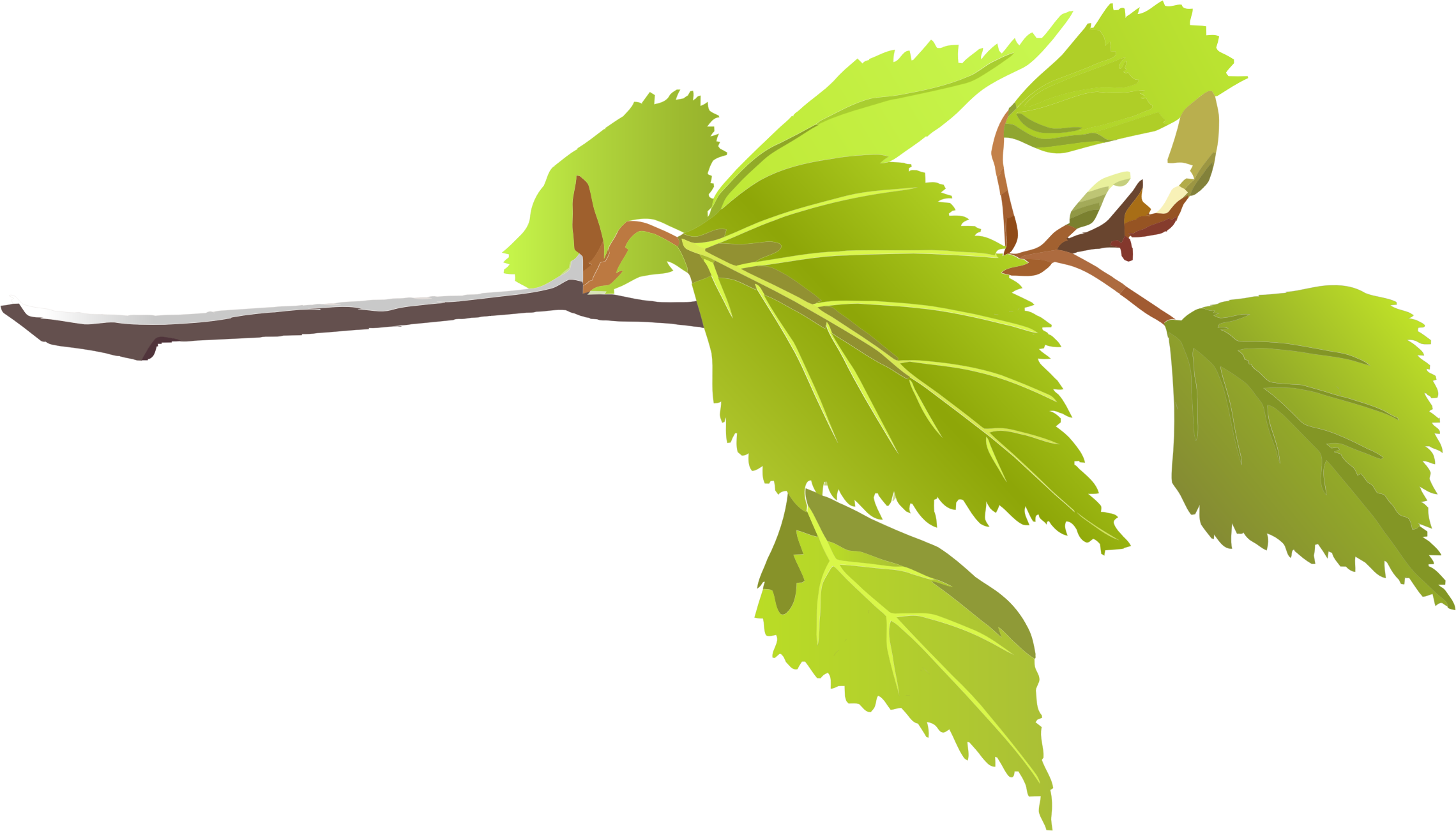2280x1302 Branch Clipart Tree Leaf