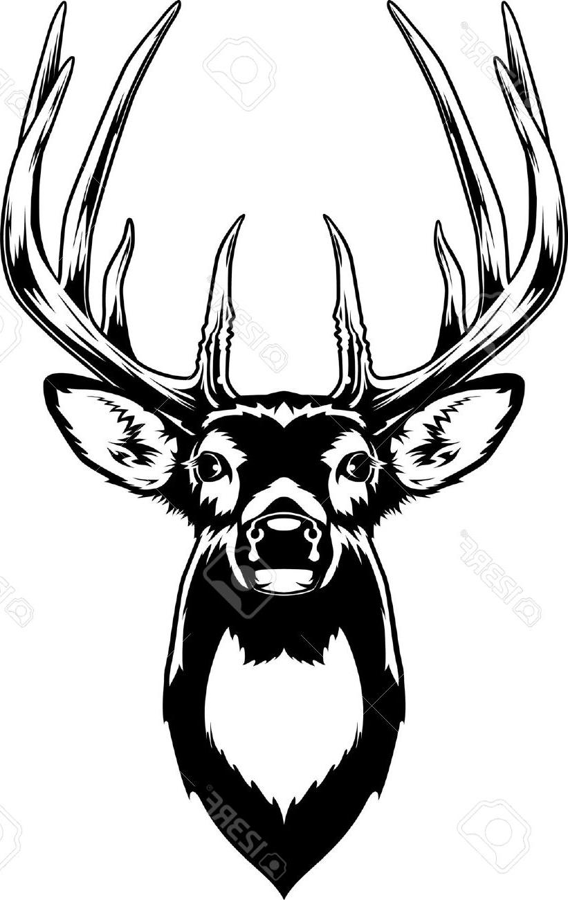 821x1300 Best Hd Whitetail Deer Head Stock Vector Buck Drawing