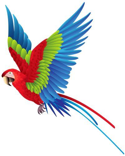 Tropical Bird Clipart