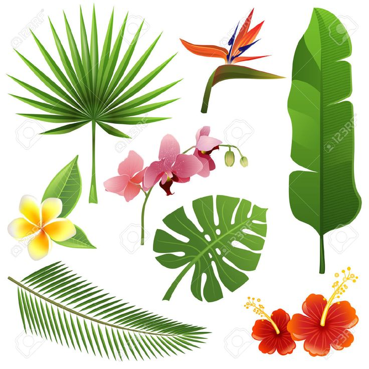 736x736 17 Best Clipart Tropical Images Tropical, Google