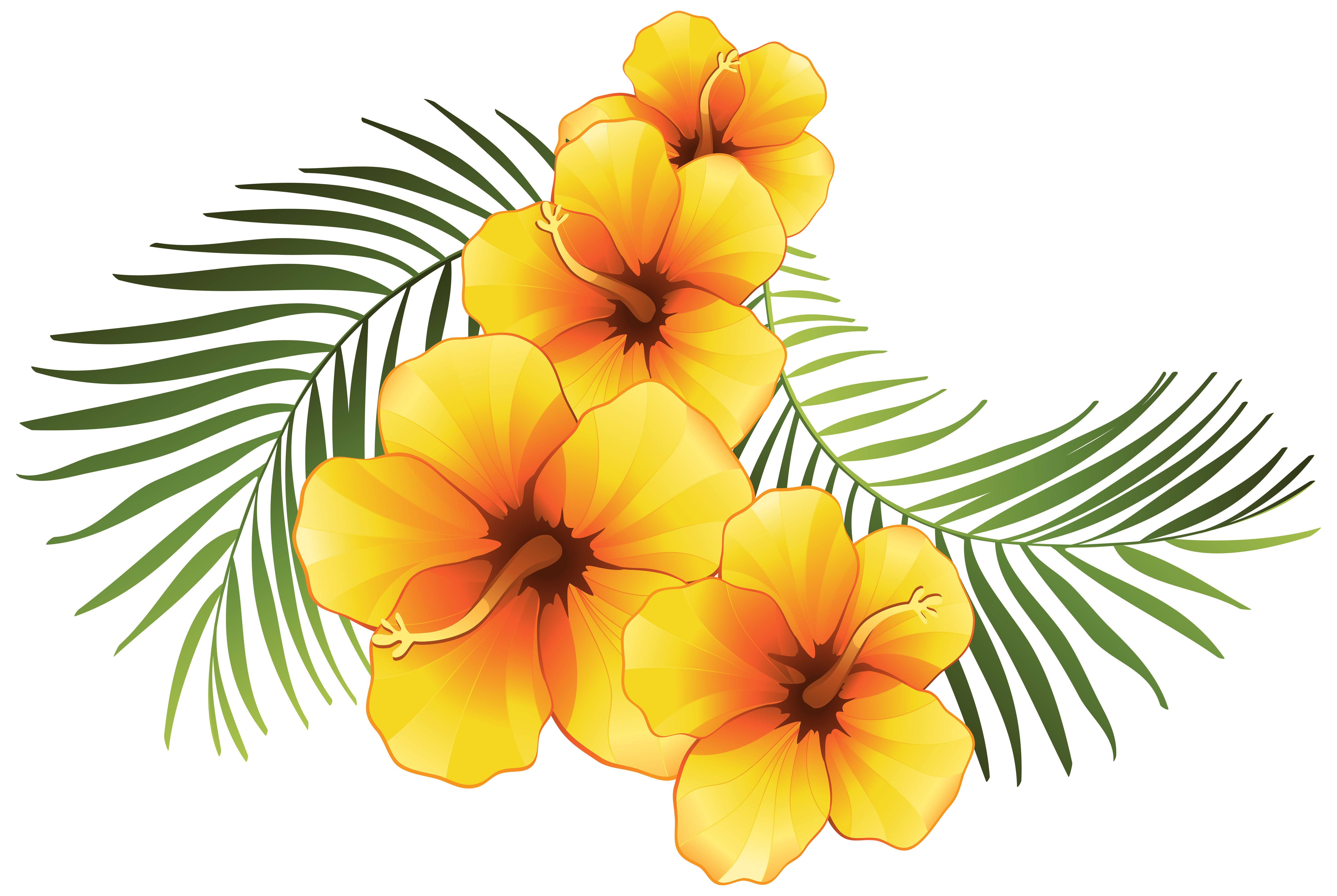 6000x4023 Exotic Clipart Hawaiian