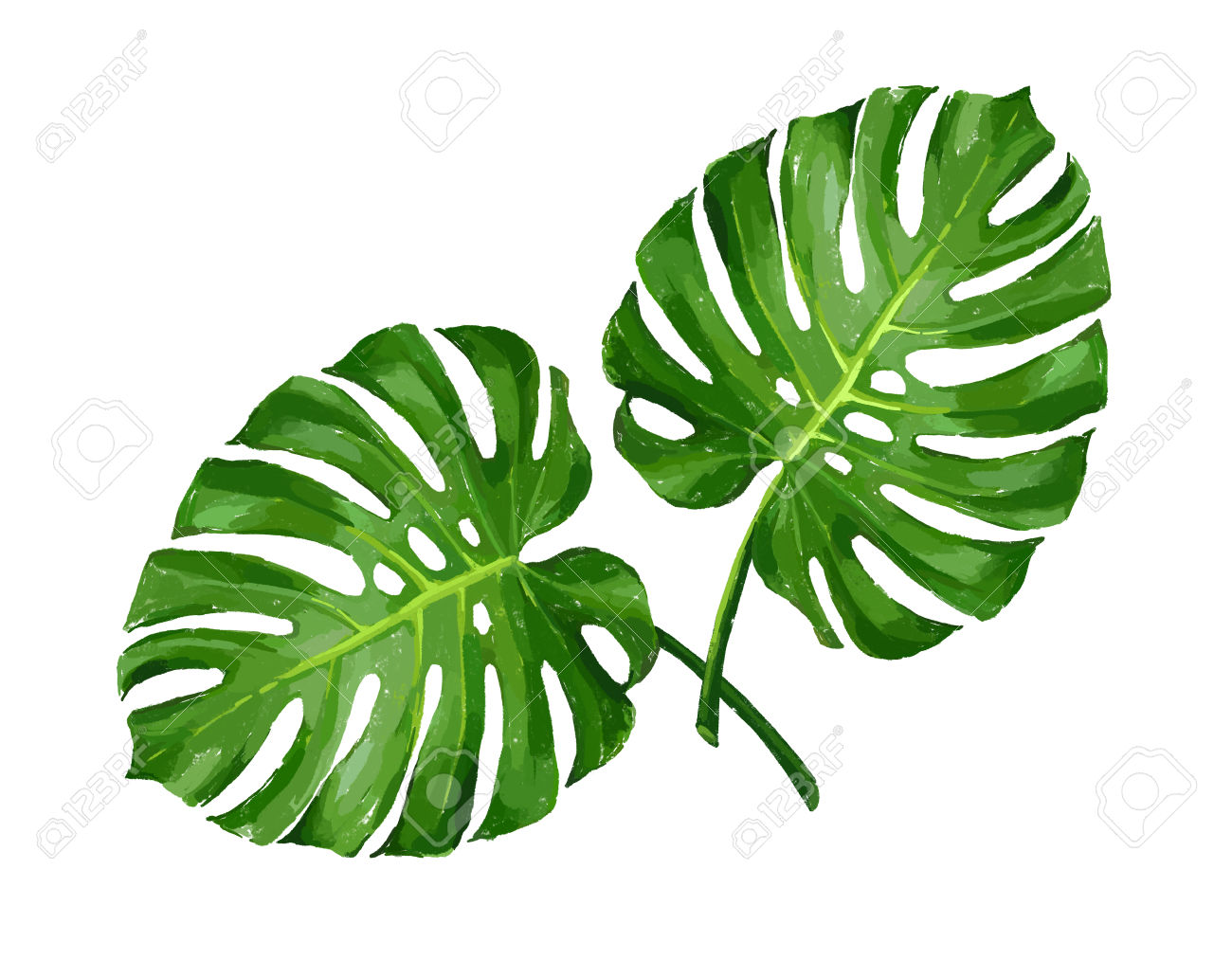 tropical leaves clipart free download best tropical tropical flowers clip art png tropical flowers clip art border