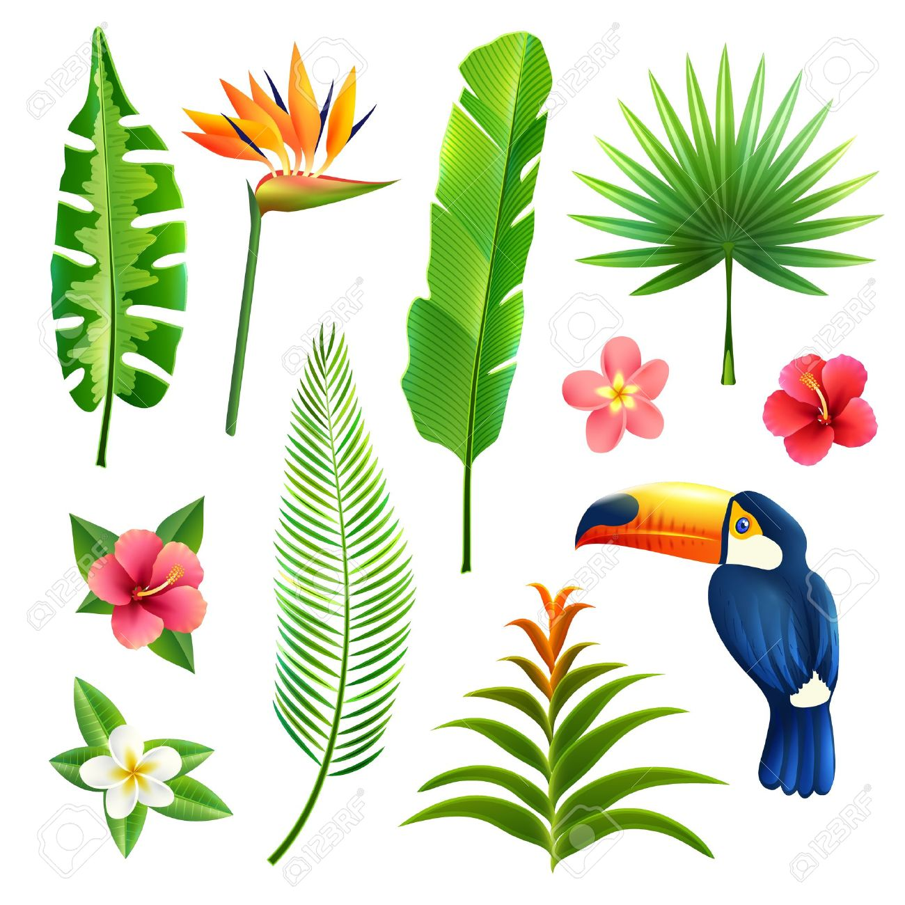 Tropical Leaves Clipart | Free download best Tropical ...