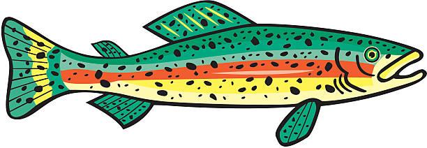612x212 Trout Clipart Rainbow Trout