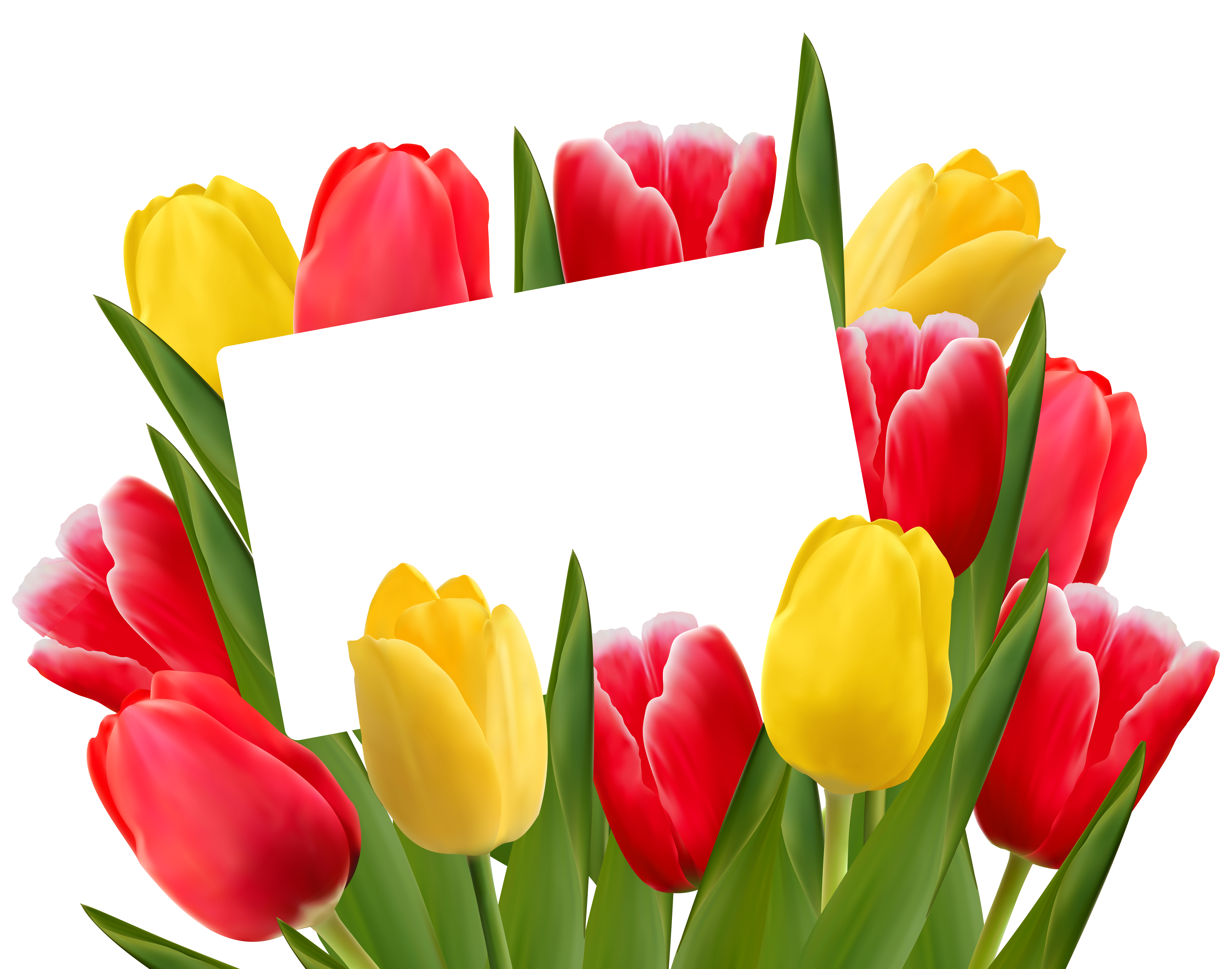 6373x5011 Transparent Red And Yellow Tulips Decoration Png Clipart Picture