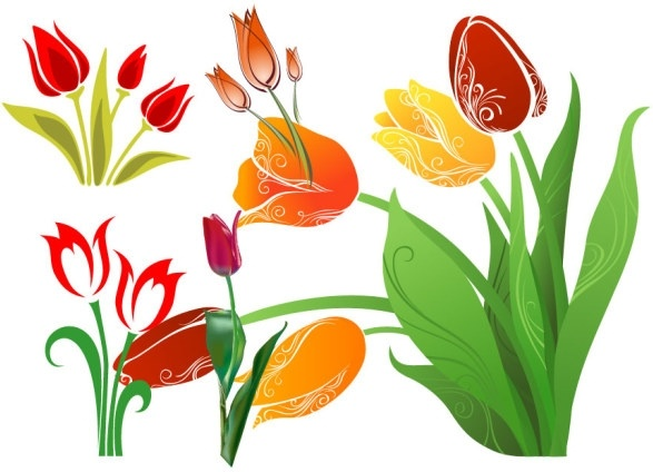 587x424 Tulip Vector Free Vector In Encapsulated Postscript Eps ( Eps