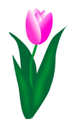 233x400 Pink tulip clipart
