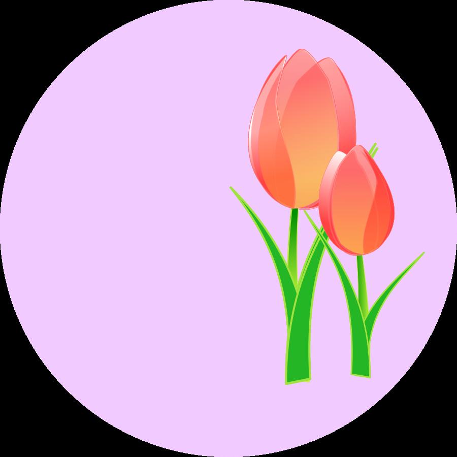 900x900 Tulip Clipart Image