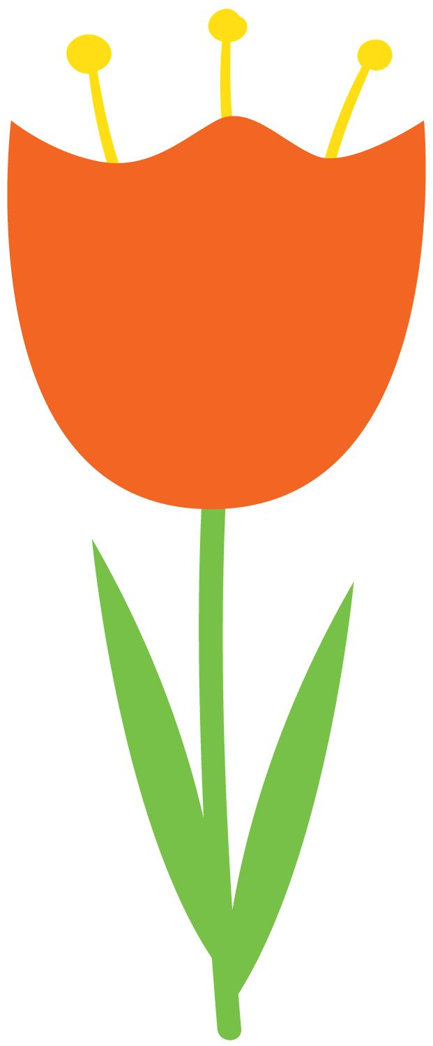 621x1500 Tulip Clipart Orange