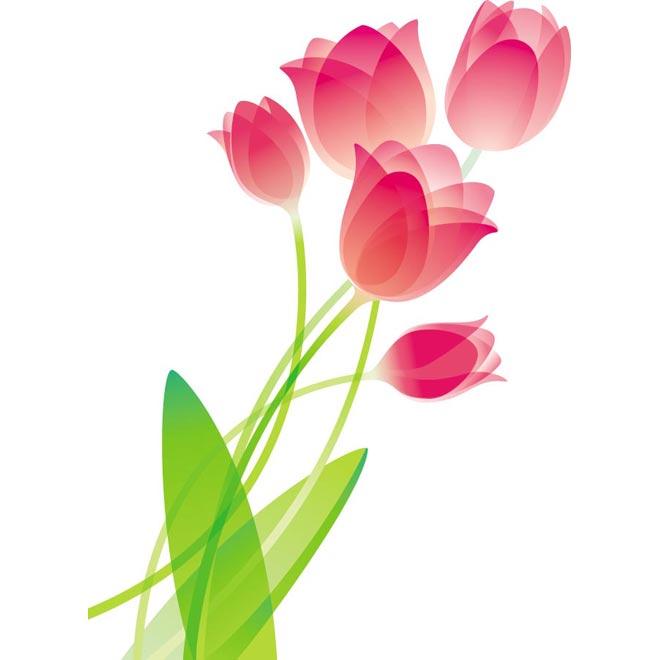 660x660 Tulip Clipart Tulip Bouquet