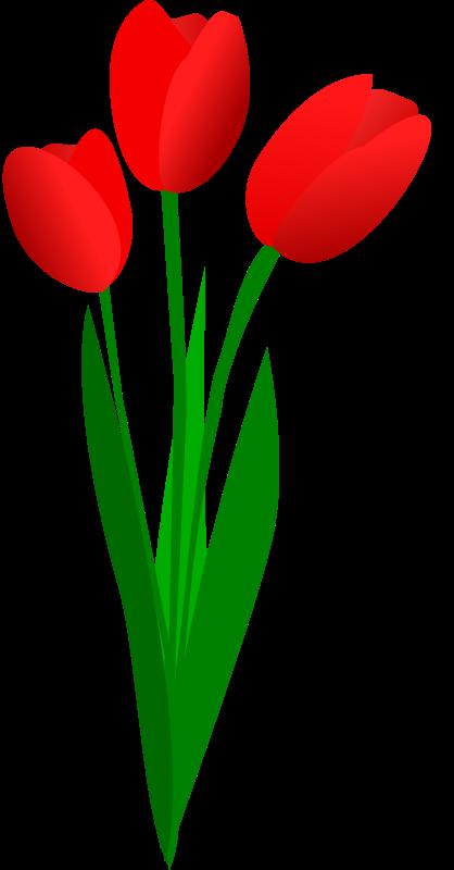 418x800 Tulip Flower Clip Art Free Clipart Images 2