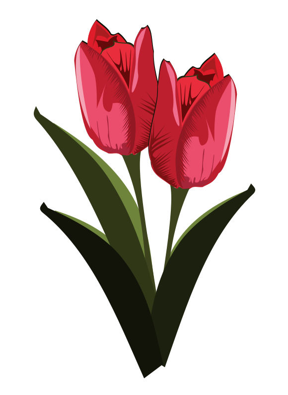 580x795 Tulip free to use clip art